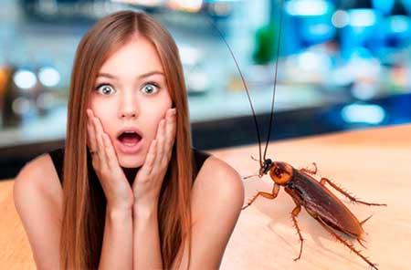 Как избавиться от блох и тараканов